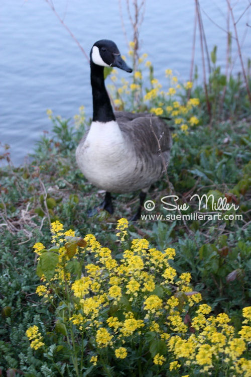 Goose with Yellow Flowers