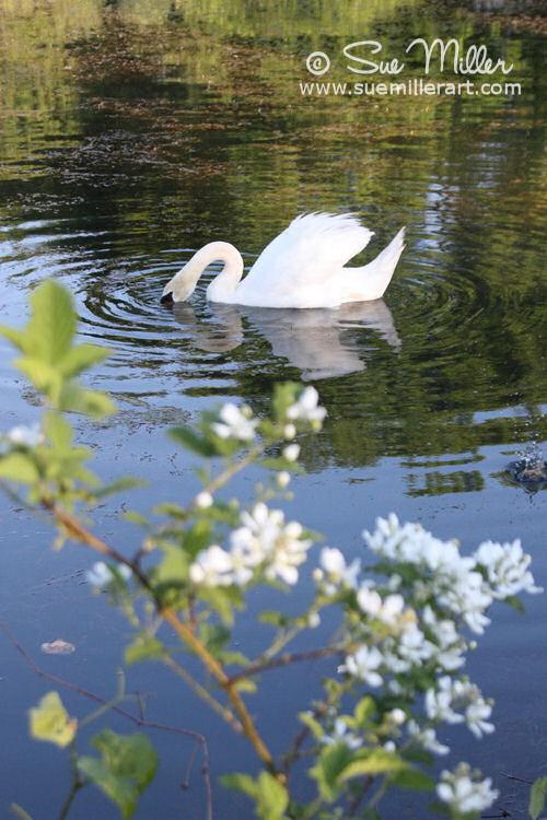 White Flower Swan