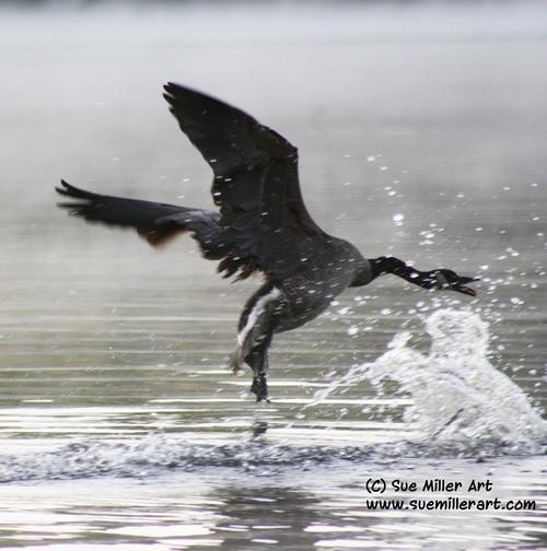Goose Flying Wild