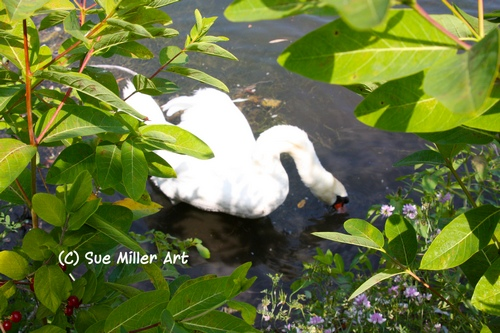 SWAN SURROUNDED WITH BLUE FLOWERS