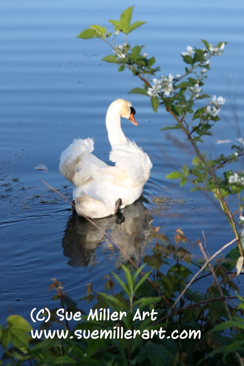 Swan with White Flowers