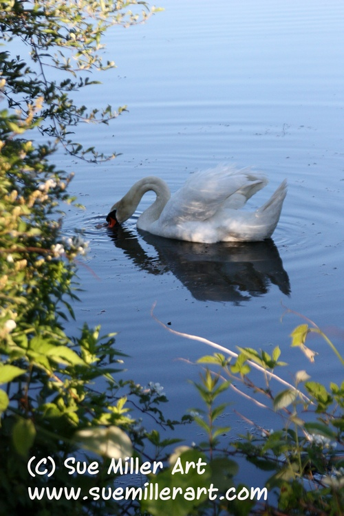 Swan and White Flowers 3