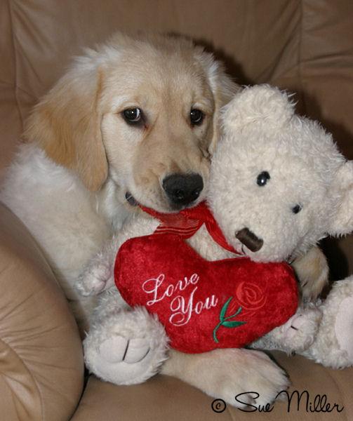 Autumn With Love You Teddy Bear