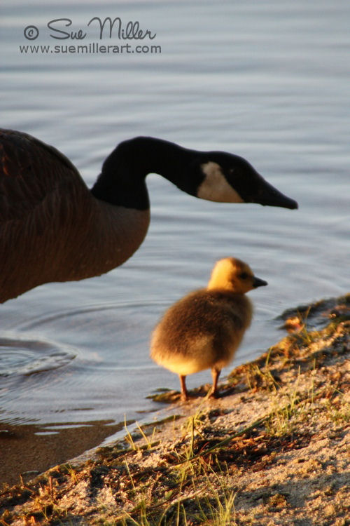 Baby and Mom Goose