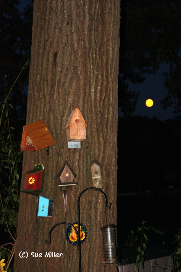 BLUE MOON & BIRDHOUSES