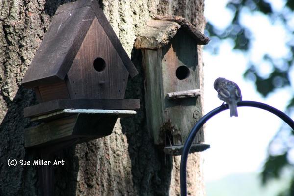 Bird houses & bird
