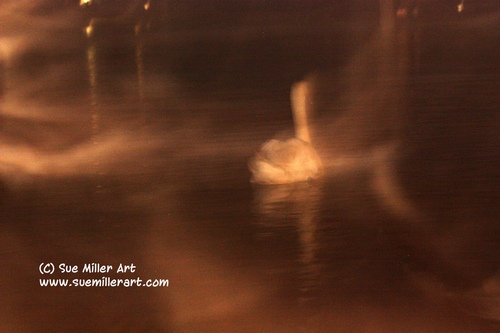 GHOST SWAN SWIMMING AWAY