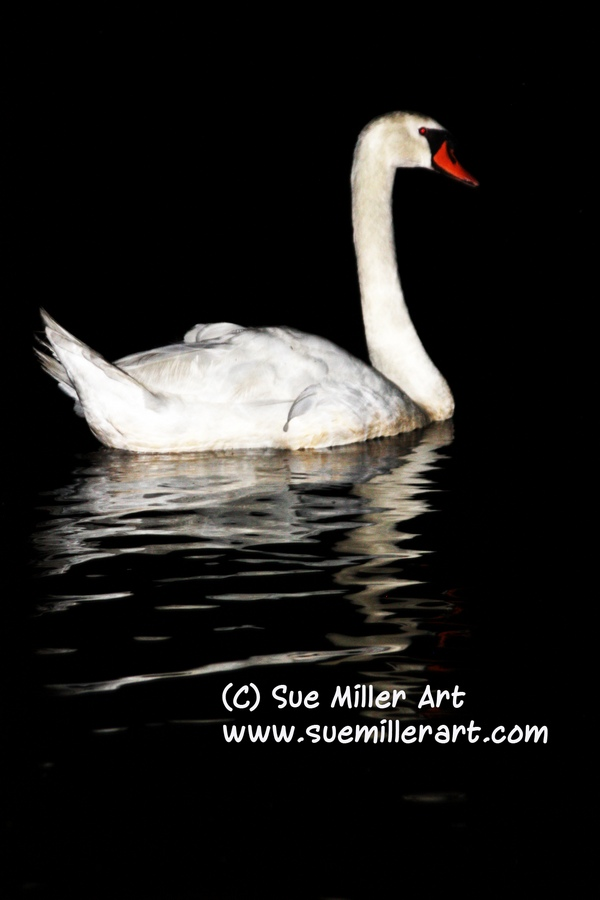 COB SWAN AT NIGHT