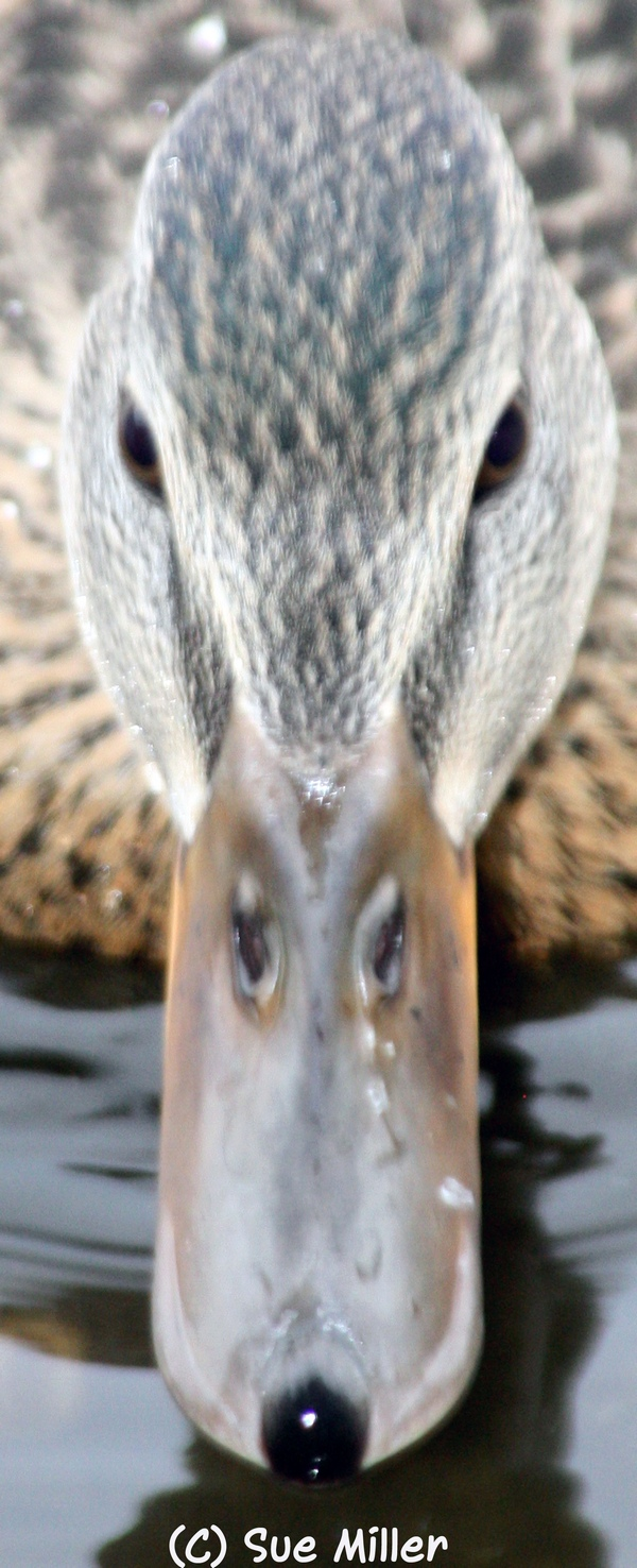 DUCK FACE CLOSE UP