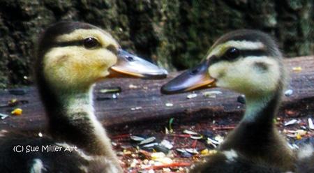 Ducks 2