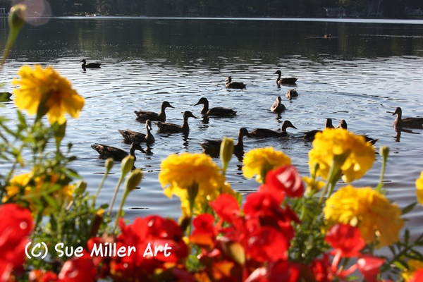 Ducks & Flowers