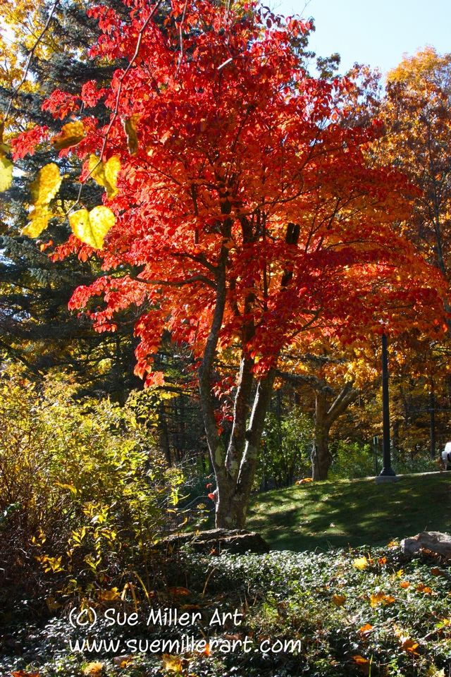 FALL RED TREE