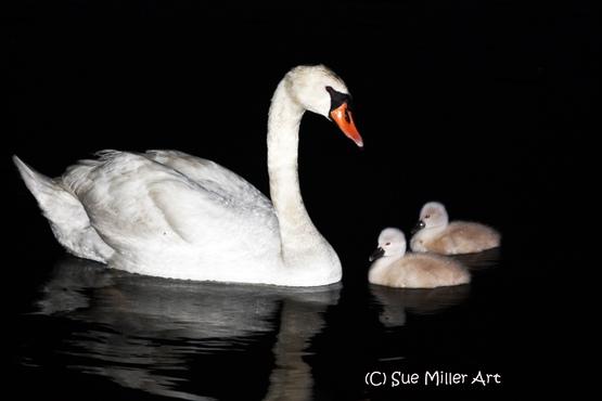 FAMILY AT NIGHT VISITING