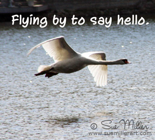 Flying by to say hello