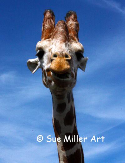 Giraffe18