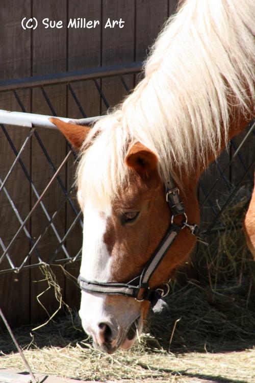 Horse at Zoo