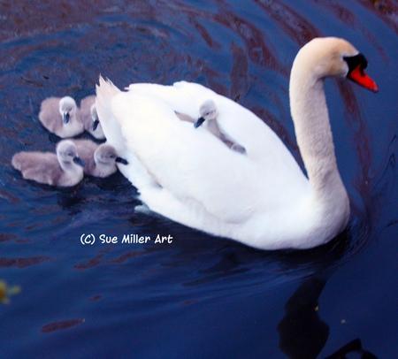 MOM SWAN W BABIES