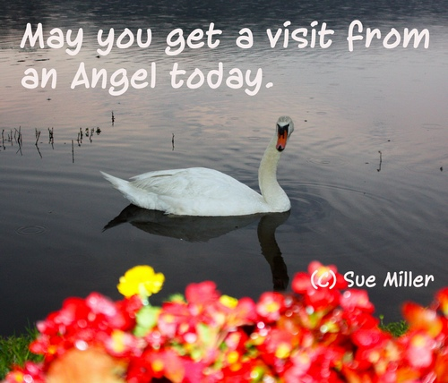 May you get a visit from an angel today