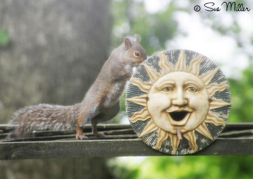 Squirrel Sun Bird House