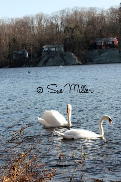 SWAN 3 YESTERDAY 2011 WOW