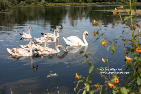 SWAN & BABIES IN FALL W YELLOW FLOWERS