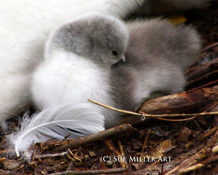 Snuggling with Feather