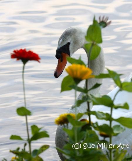 Swan w flowers