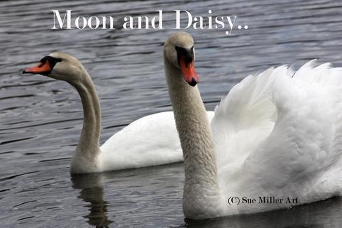 MOON & DAISY