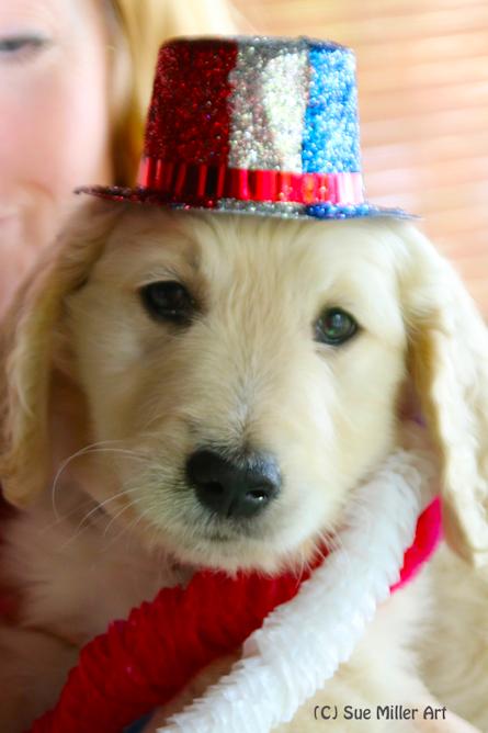 USA Puppy