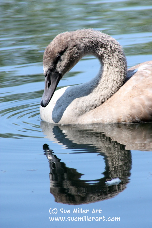 UGLY DUCKLING UP CLOSE