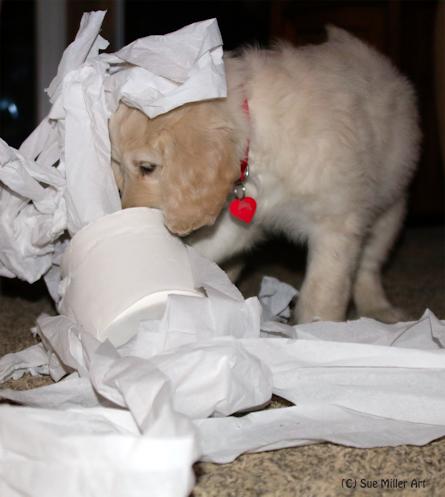 Toilet Paper Party