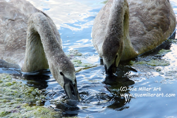 Ugly Ducklings drinking