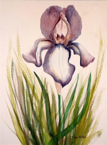 The Iris Print